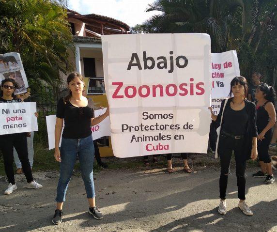 Animalistas denuncian la criminalización de su activismo en Cuba