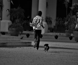Cuba: El Decreto-Ley de Bienestar Animal entrará en vigor para julio de 2021