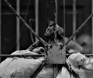 Decreto Ley de Bienestar Animal en Cuba: ¿A qué se debe la demora en hacerlo público?