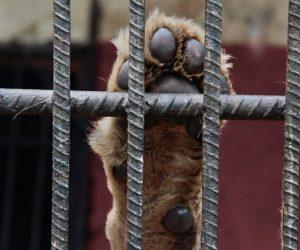 ¿Qué va a pasar con los zoológicos en Cuba cuando entre en vigor el Decreto Ley de Bienestar Animal?